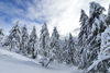Pokljuka and slopes of Visevnik mountain, Slovenia, on morning of 12th of December 2020, after extensive snow fall, which brought more than 1.5m of snow to Julian Alps in the last several days.